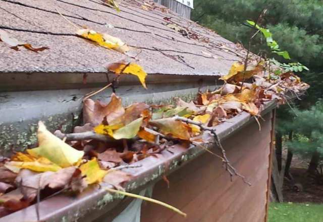 autumn leaves in a gutter