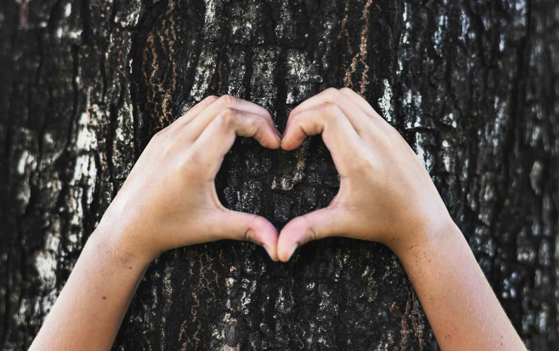 Eco friendly heart shaped hands around tree in Manchester