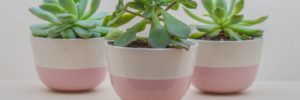 potted plans are a great spring idea