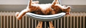 cat on a chair enjoying the central heating system