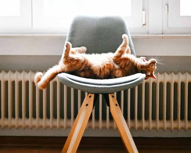 cat on a chair enjoying the central heating system in Nottingham